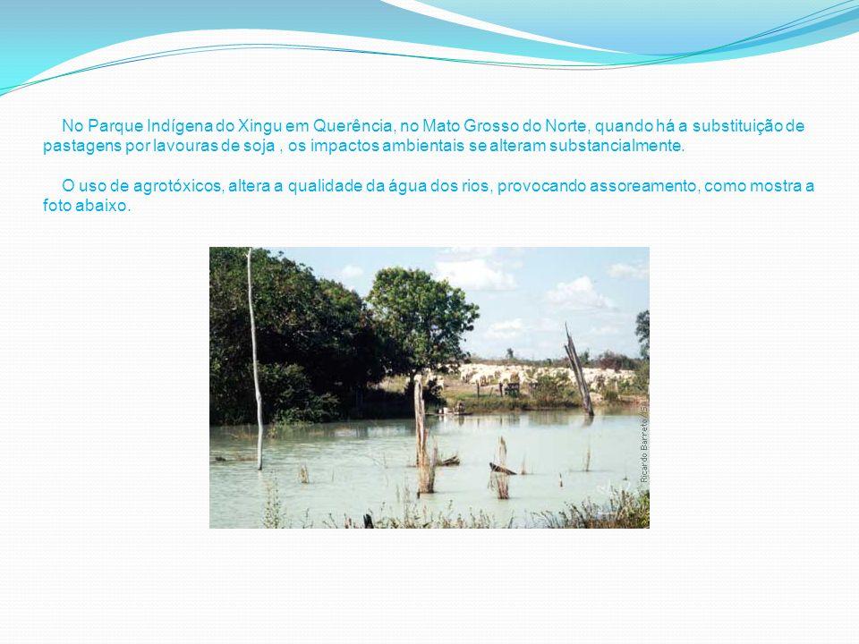 N ] No Parque Indígena do Xingu em Querência, no Mato Grosso do Norte, quando há a substituição de pastagens por lavouras de soja , os impactos ambientais se alteram substancialmente.
